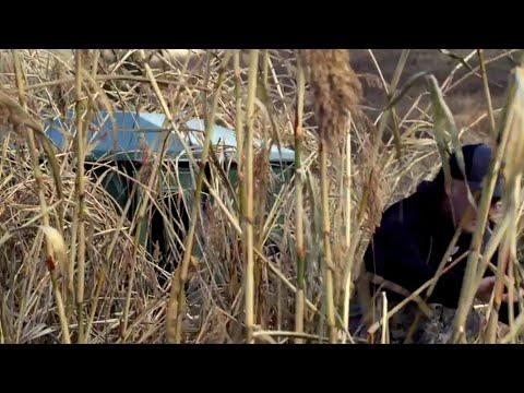 Whitetail Buck Travel Patterns Revealed