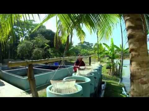 Aquaculture is changing lives in Bangladesh