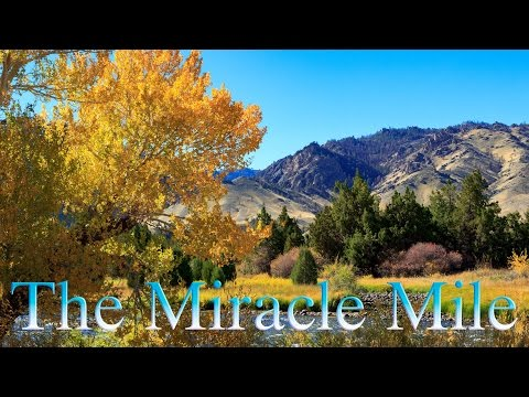 The Miracle Mile 2016