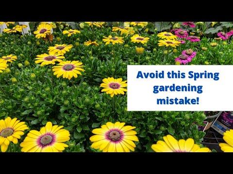 Don't make this spring gardening mistake