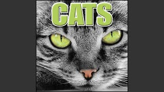 Cat Cat, Meowing, Hungry, Outdoors, Animal, Cats - Domestic Cats, Blockbuster Sound Effects