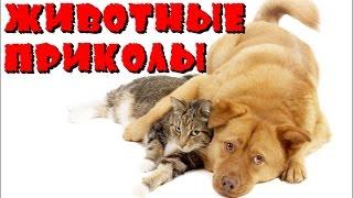 ●ПРИКОЛЫ С ЖИВОТНЫМИ● Самые смешные приколы про животных | Видео приколы про животных