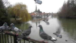 pigeons on a railing by the Thames in Abingdon