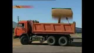В Казахстане 20 процентов зерна уходит в доход элеваторам