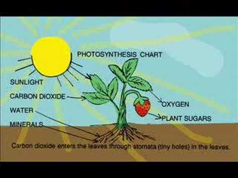 Narrated Video: A Plant Story  YouTube