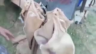 Fındık çuvallama makinesi yapıldı
