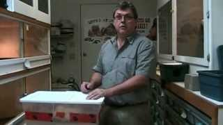Olive Python Eggs And A Big Female Ball Python - Henry Piorun Reptiles