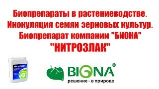 Протравка семян зерновых азотфиксаторм и фосфатмобилизатором/Инокуляция/БИОНА/НИТРОЗЛАК