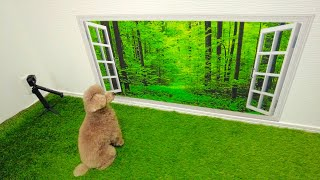 [Toy Poodle] Dog's Reaction to The Wall Optical Illusion!