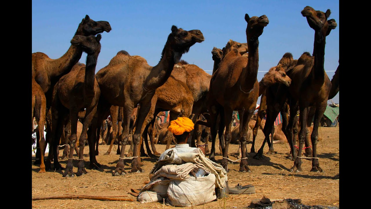 INDE (RAJASTHAN : Pushkar) : CARNET DE ROUTE, documentaire de voyage, India travel documentary