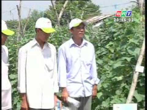 Kỹ thuật trồng và chăm sóc giống dưa leo HUNTER 1 0