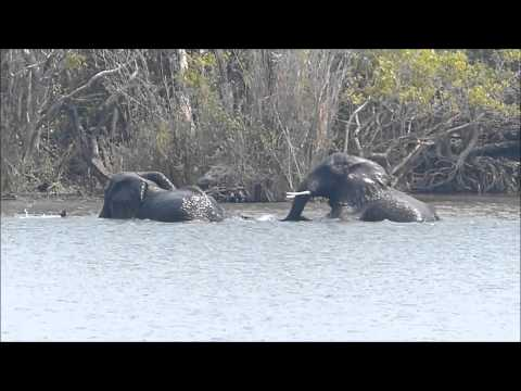 Africa 4: Kafue National Park, Zambia