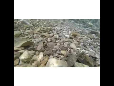 fossil hunting texas san marcos river youtube