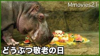 円山動物園で、1967年から続く恒例行事、どうぶつ敬老の日。 今年は、ご...