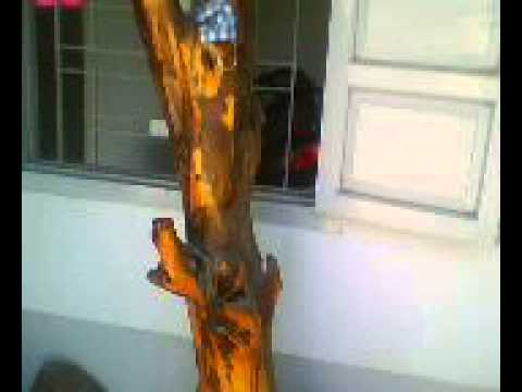 gỗ trắc đỏ