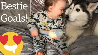 My Husky is the Best Babysitter!! [IMPOSSIBLE NOT TO SMILE!]