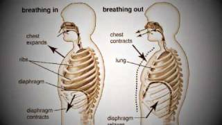 Using the Diaphragm - Brighton Singing Lessons