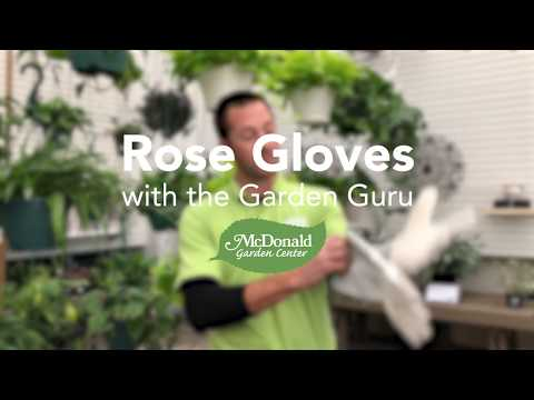 Our Favorite Rose Gloves