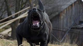 10 ras psów które przerażają ludzi