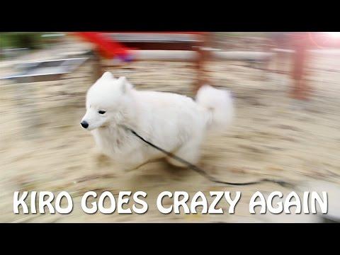 Kiro goes crazy AGAIN