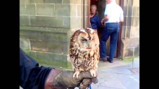 British Tawny Owl bird call sound effect