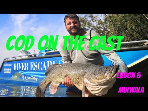 Cod On The Cast - Fishing Tips For Lake Eildon And Lake Mulwala