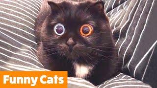 Funniest Cute Cats | Funny Pet Videos