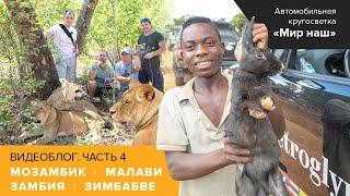 Видеоблог из Африки. Часть 4. Мозамбик, Малави, Замбия, Зимбабве (снято телефонами)