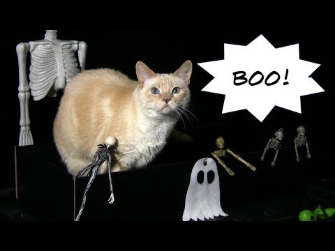 Cats Trick or Treat for Halloween – Furball Fables