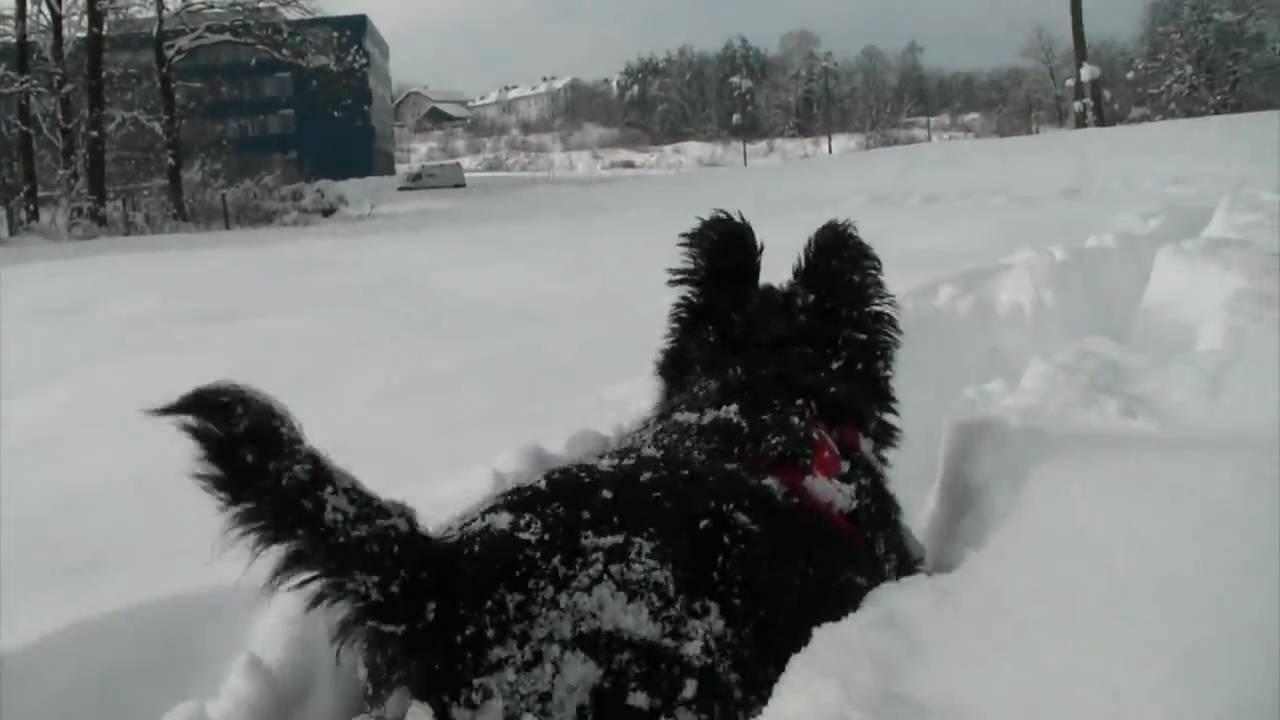 Snow Dog Treat Videos