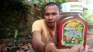 Video Unbox Nature Stek Perangsang Akar Untuk Stek Batang Tanaman Buah Di Pekarangan Rumah download MP3, 3GP, MP4, WEBM, AVI, FLV Juli 2018