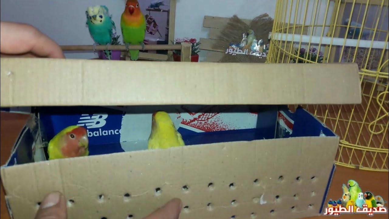 أشتريت طيور جديدة + كم كيلو أكل تاكل طيوري خلال فترة الراحة