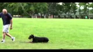 Claystopdog.com Training