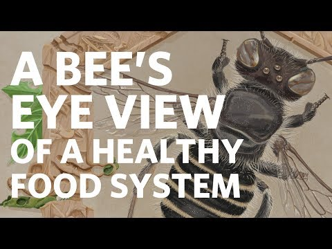 A Bee's Eye View of a Healty Food System - Claire Kremen