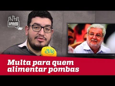 Vereador Fala Sobre Lei Que Prevê Multa Para Quem Alimentar Pombas Em São Paulo