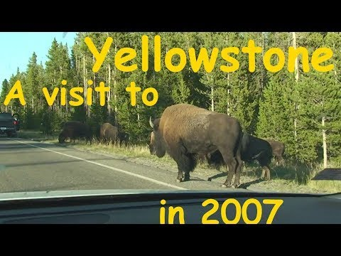 A Visit to Yellowstone National Park in 2007