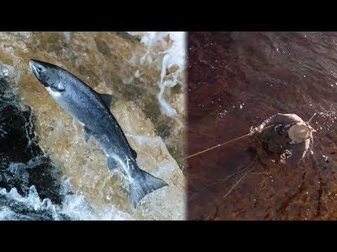 Salmon Fishing In Scotland | Earth Unplugged