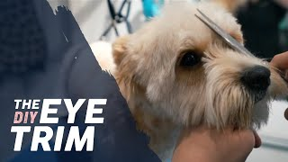 How to Trim a Dog's Eyes  BASIC TRIMMING Tutorial #doggrooming #dogfacetrim #doggroomingtutuorial
