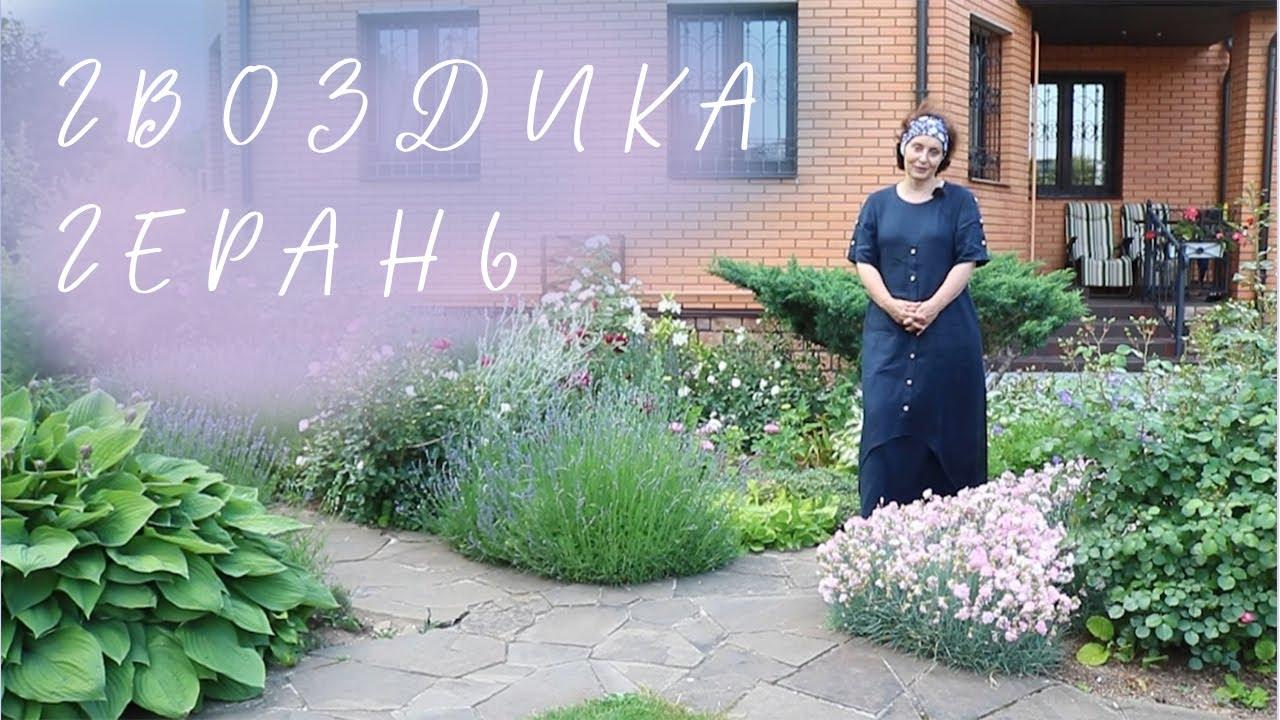 Гвоздика I Герань I Сад Людмилы Кудасовой