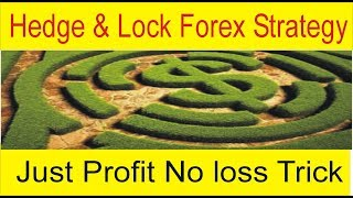 Hedge And Lock Forex Profitable Strategy | 500$ investment daily profit Scalping Trick by Tani Forex