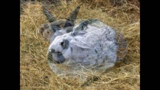 животные говорят  картинки кроликов