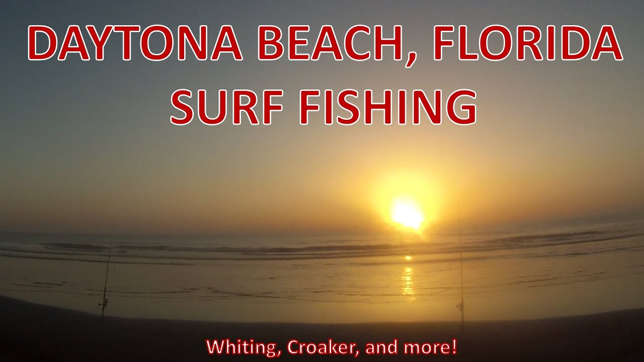 Surf fishing for whiting and croaker in daytona beach for Whiting fish florida