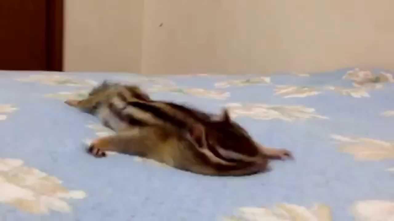 Верверичка ужива во свежо испрана постелнина
