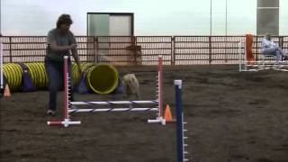 Capitol Canine Dog Sports, Canine Performance Events (cpe) Agility Trial
