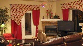 Радиоуправляемый вертолет и котик(Радиоуправляемые игрушки - маленький радиоуправляемый вертолет летает по комнате и очень интересует симпа..., 2014-08-09T23:21:40.000Z)