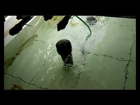 黑哥带你参观马来西亚龙鱼养殖场