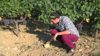 The wine cowboy Episode 1: Le terroir