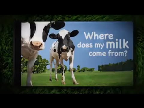 The suffering of farmed cattle - Animal Aid