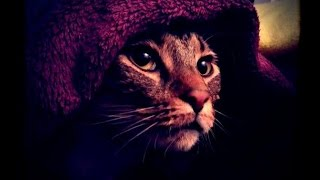 КОШКИ-МЫШКИ - ЖЕСТОКОЕ ВИДЕО :(