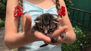 Щенячий восторг Приехали в Запорожье Много новых котят